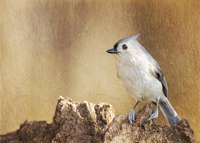 Tufted Titmouse Photograph - Tufted On Tree Bark by Bill Tiepelman