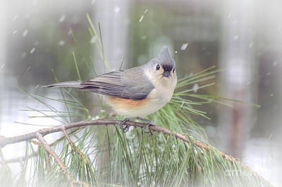 Photograph - Tufted Titmouse - A Winter Delight by Kerri Farley