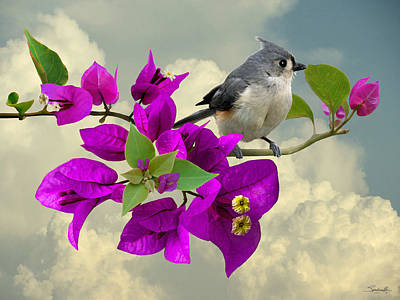Titmouse Digital Art - Tufted Titmouse And Purple Bougainvillea by IM Spadecaller