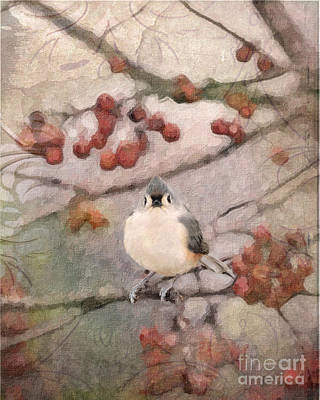 Tufted Titmouse Art Print by Betty LaRue
