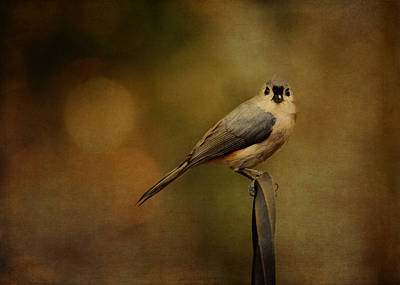 Photograph - Tufted Titmouse by Carla Parris