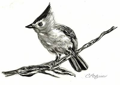 Tufted Titmouse Drawing - Tufted Titmouse by Carol Allen Anfinsen