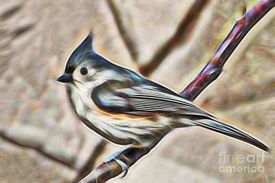 Nature Photograph - Tufted Titmouse by D Hackett