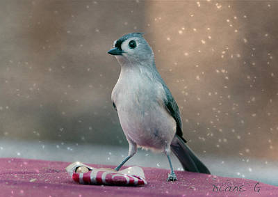 Photograph - Tufted Titmouse In Winter by Diane Giurco