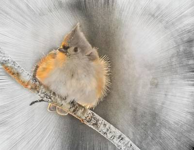 Titmouse Digital Art - Tufted Titmouse In Winter. by Rusty Smith