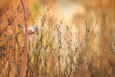 Tufted Titmouse Mixed Media - Tufted Titmouse by Lori Deiter