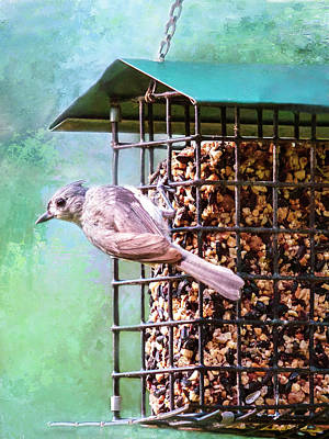 Photograph - Tufted Titmouse On Feeder by Bellesouth Studio