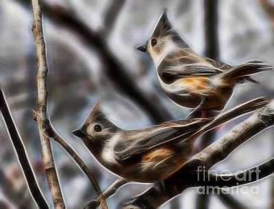 Photograph - Tufted Titmouse Pair by D Hackett