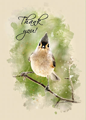 Mixed Media - Tufted Titmouse Watercolor Thank You Card by Christina Rollo