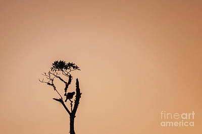 Photograph - Tui Morning Sillhouette by Robert Munden