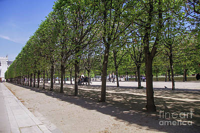 Photograph - Tuilleries Garden by Patricia Hofmeester