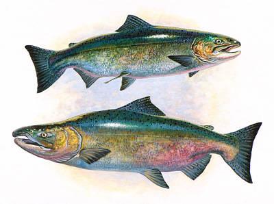 Painting - Tule Chinook Salmon by Shari Erickson