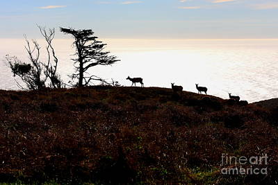 Tule Elks Of Tomales Bay Art Print by Wingsdomain Art and Photography
