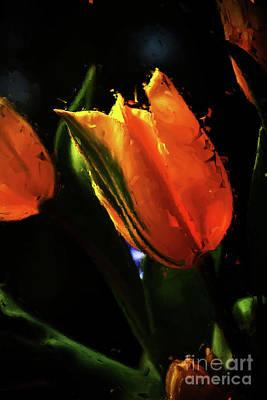 Tulip 00321s Original