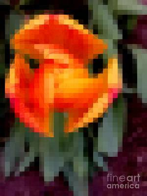 Photograph - Tulip 1 Honoring Princess Diana by Richard W Linford