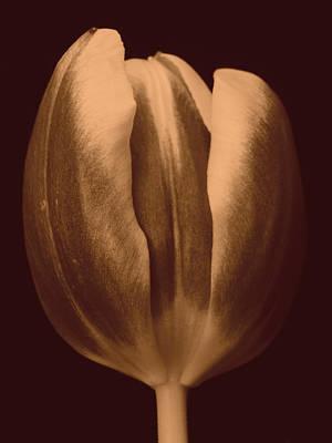 Owls - Tulip 1 by Jouko Lehto