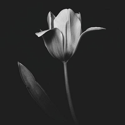 Photograph - Tulip 0155 by Desmond Manny