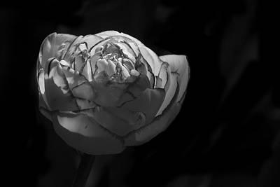 Photograph - Tulip - 365-25 by Inge Riis McDonald