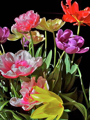 Art Print featuring the photograph Tulip 8 by Pamela Cooper
