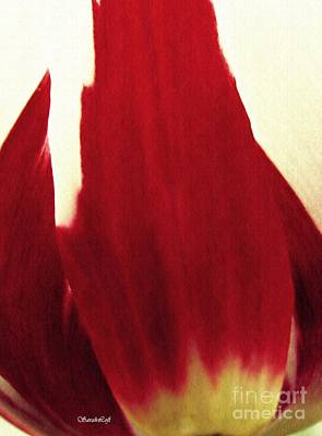 Photograph - Tulip Abstract 4 by Sarah Loft