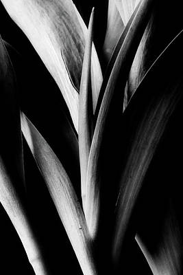 Photograph - Tulip Abstract by Mike Eingle
