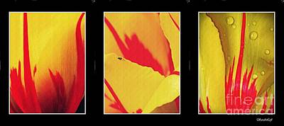 Photograph - Tulip Abstract Triptych 1 by Sarah Loft
