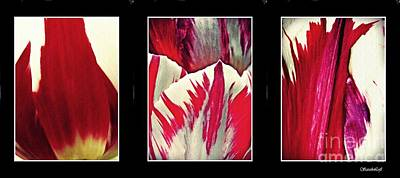 Photograph - Tulip Abstract Triptych 2 by Sarah Loft