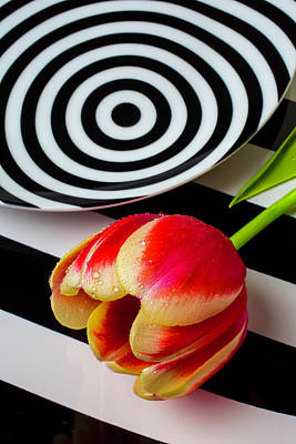 Dotd Photograph - Tulip And Graphic Plates by Garry Gay