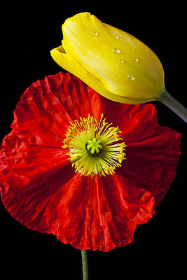 Flower Tulips Photograph - Tulip And Iceland Poppy by Garry Gay