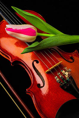Concert Photograph - Tulip And Violin by Garry Gay