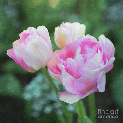 Photograph - Tulip Angelique by Liz Leyden