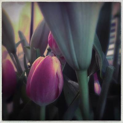 Photograph - Tulip by Anne Thurston