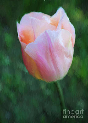Digital Art - Tulip Apricot Beauty by Liz Leyden