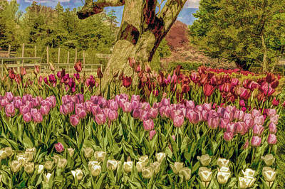 Tulip Bed At Longwood Gardens In Pa Print by Geraldine Scull
