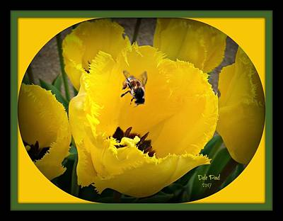Photograph - Tulip Bee by Dale Paul