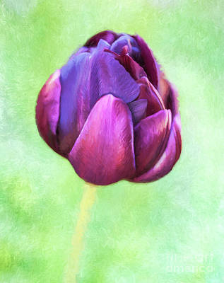 Digital Art - Tulip Black Hero by Liz Leyden