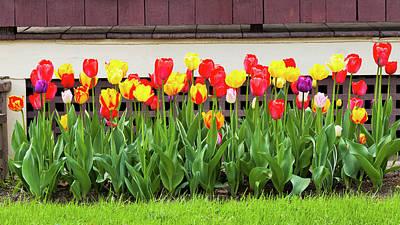 Photograph - Tulip Border Garden by Alan L Graham