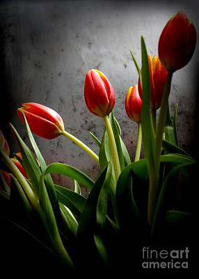 Photograph - Tulip Bouquet 2 by Mary-Lee Sanders