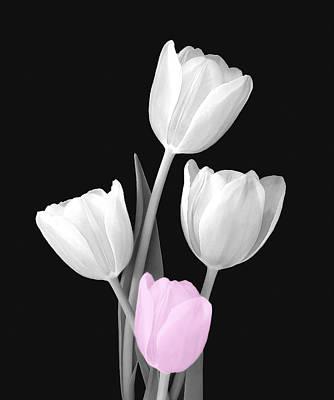 Photograph - Tulip Bouquet Bw by Johanna Hurmerinta