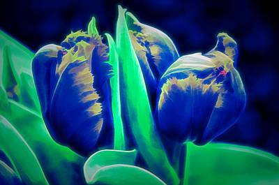 Photograph - Tulip Buds At Night by Cornelia DeDona