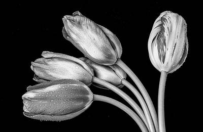Flowers And Water Drops Wall Art - Photograph -  Tulip Bunch In Black And White by Garry Gay