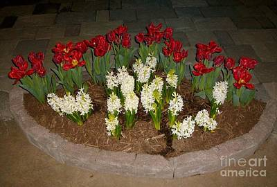 Photograph - Tulip Circle by Ej Catoe