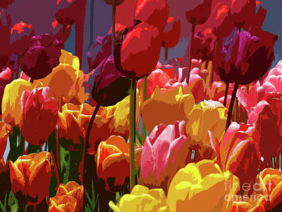 Tulip Confusion Art Print by Sharon Talson