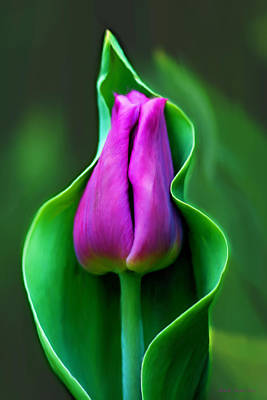 Photograph - Tulip Cradled In Leaf by Michelle Joseph-Long