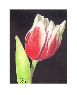 Tulip Drawing - Tulip by Crispin  Delgado