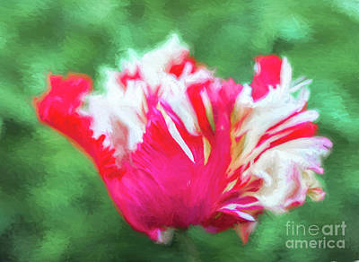 Digital Art - Tulip Estella Rijnveld by Liz Leyden