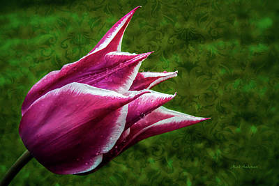 Photograph - Tulip Fantastic by Mick Anderson