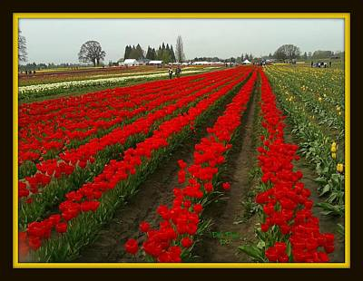 Photograph - Tulip Farm by Dale Paul