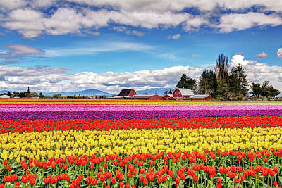 Photograph - Tulip Farm In The Skagit Valley by Pierre Leclerc Photography