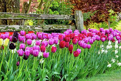 Split Rail Fence Photograph - Tulip Fence by Mary Jo Allen